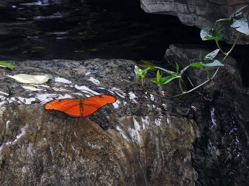 Petite visite chez les papillons en liberté... 00310
