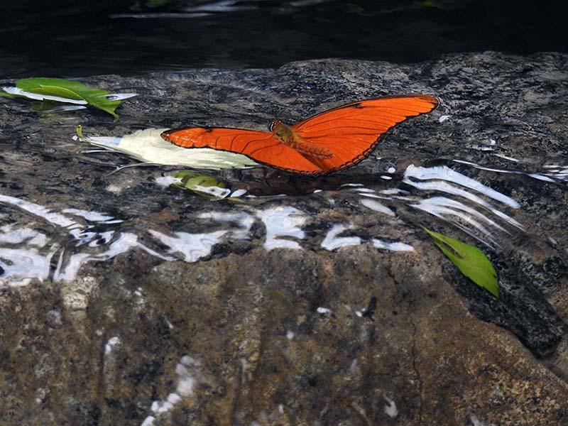 Petite visite chez les papillons en liberté... 00410