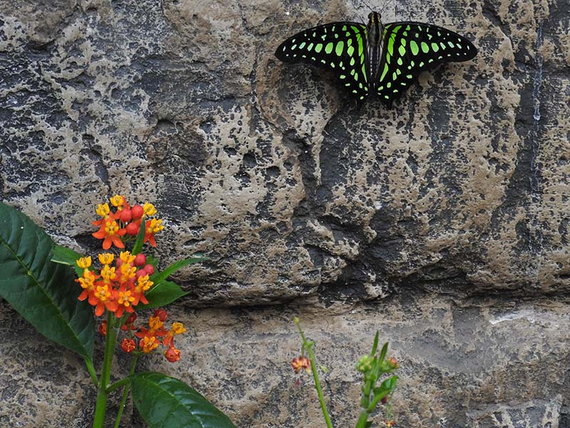 Petite visite chez les papillons en liberté... 00910