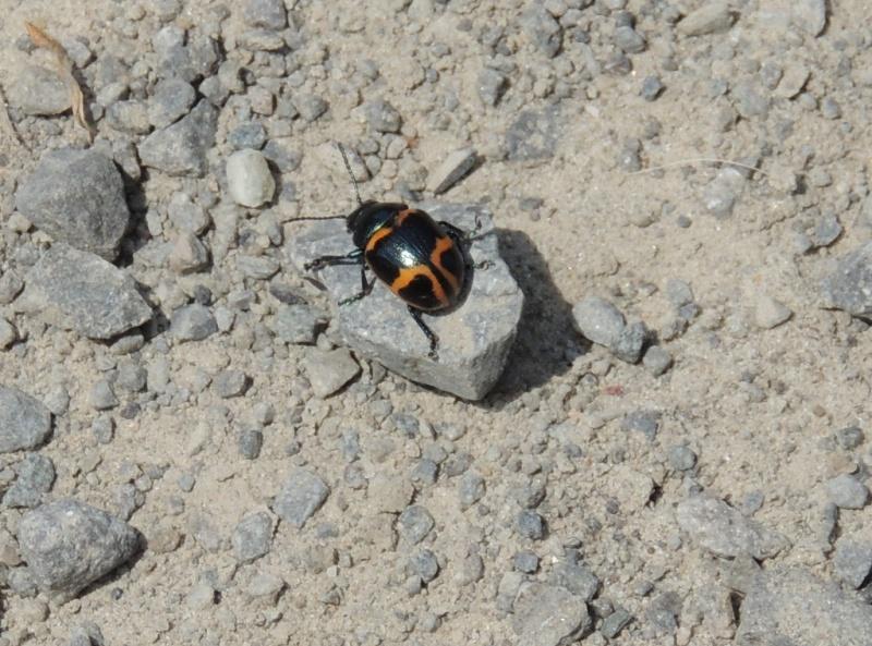 insecte à identifier Dscn9412