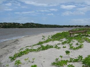 L'isola delle conchiglie Copia_29