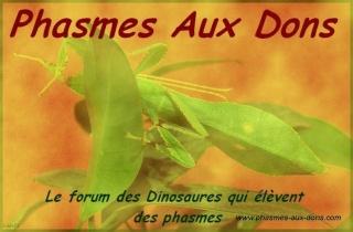 Phasmes aux dons (nouveau partenaire) Pad10111
