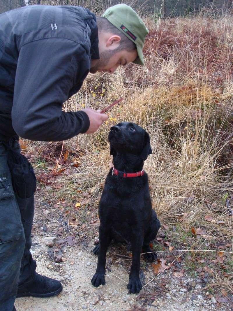 SAXO... X labrador, mâle, 9 ans Dsc04216