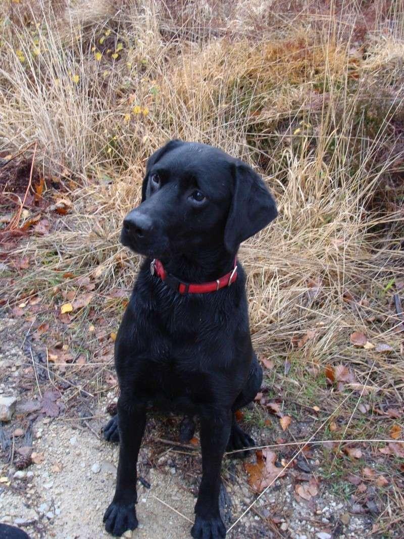 SAXO... X labrador, mâle, 9 ans Dsc04218