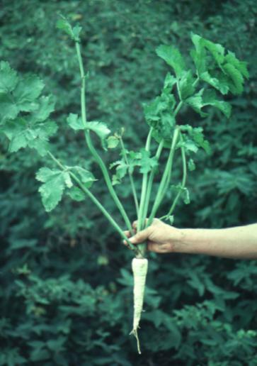 dans les jardins au Moyen âge Hdwt4-11