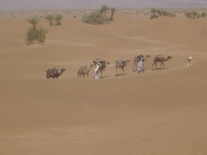 Maroc Octobre / Novembre 2009 - Page 2 Dsc00011