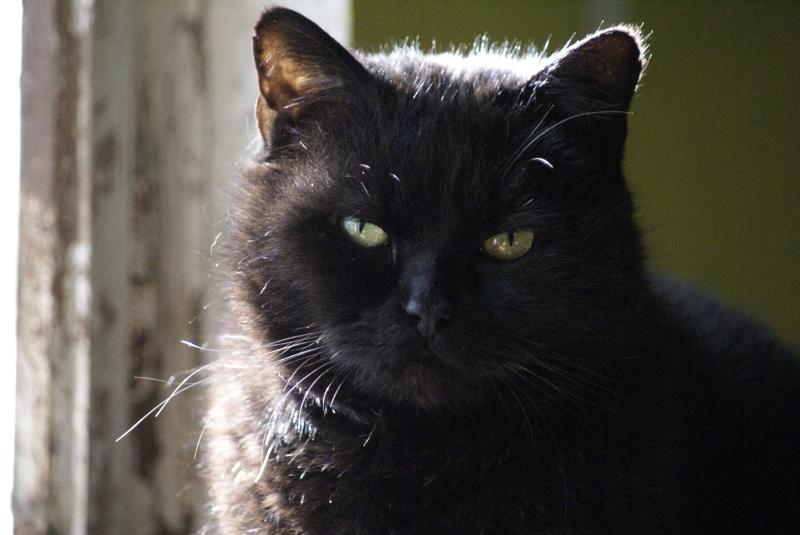 SOREN, 8 ans, câlinou FIV à adopter sans chat (27) - Page 2 Soren310