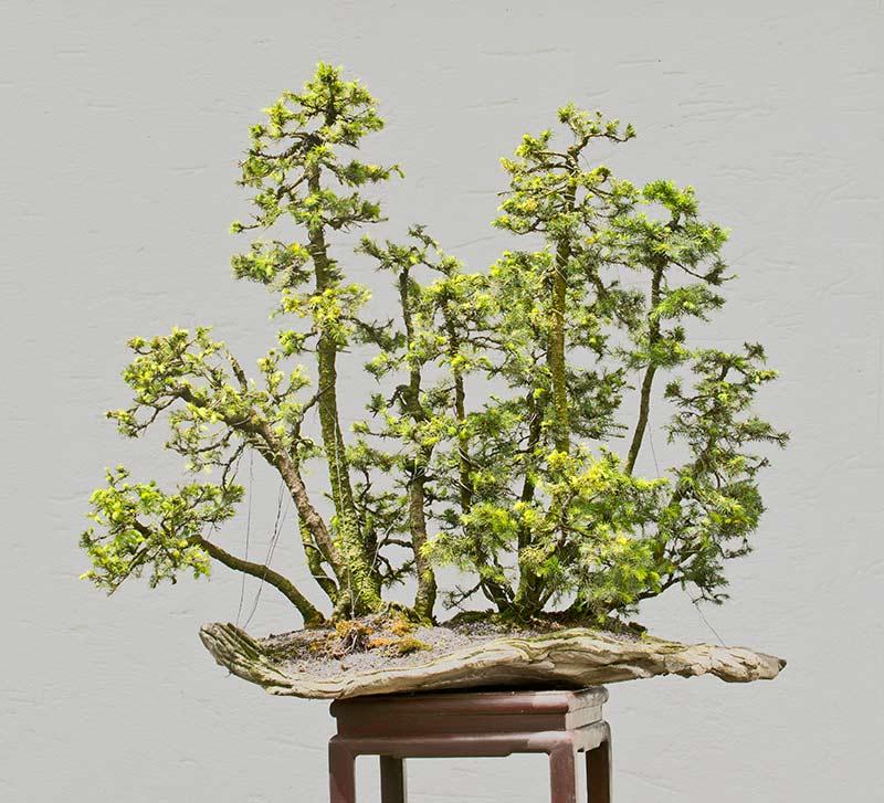 my new work - atelier bonsai Element - Page 10 2016-011