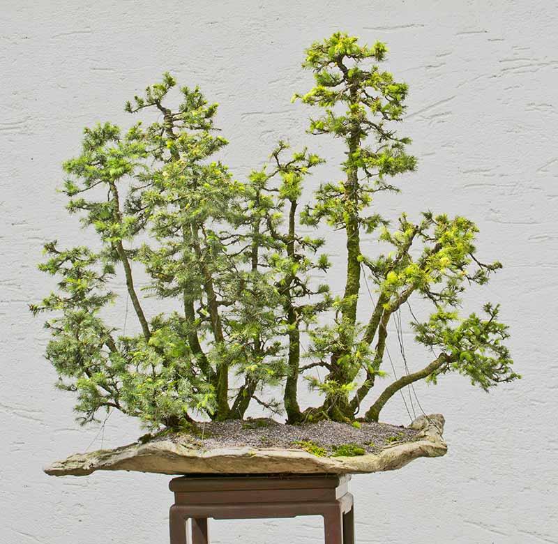 my new work - atelier bonsai Element - Page 10 2016-012
