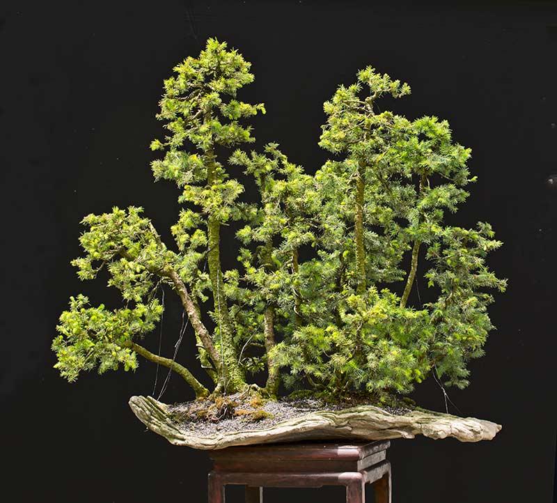 my new work - atelier bonsai Element - Page 10 2016-013
