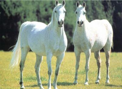 les chevaux  - Page 3 69902110