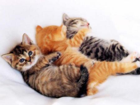 les chats 81146610