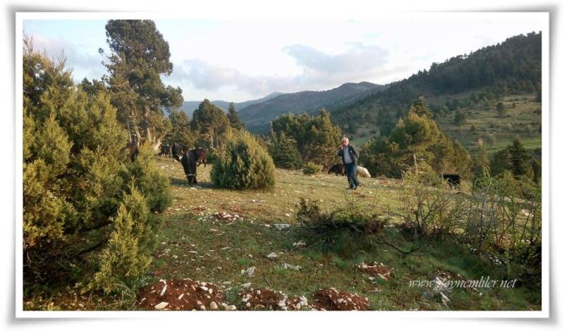 Tavşan tepesi-Göynem Nisan 2016 Tvsntp11