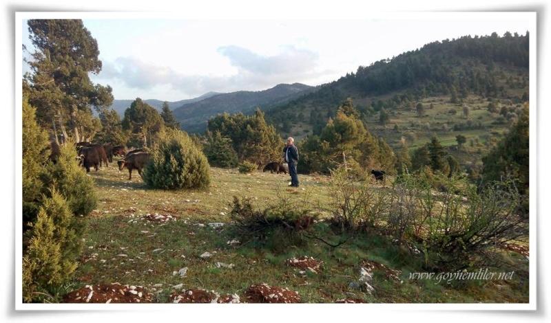 Tavşan tepesi-Göynem Nisan 2016 Tvsntp12