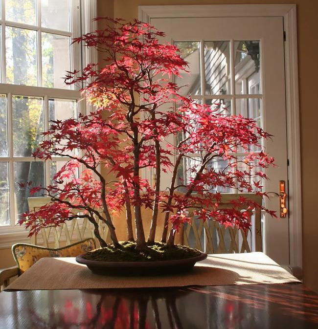 Bộ sưu tập những kiệt tác bonsai đẹp nhất thế giới Amazin10