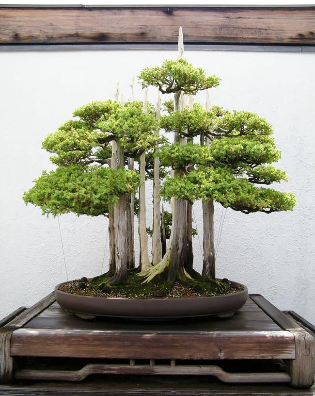 Bộ sưu tập những kiệt tác bonsai đẹp nhất thế giới Amazin15
