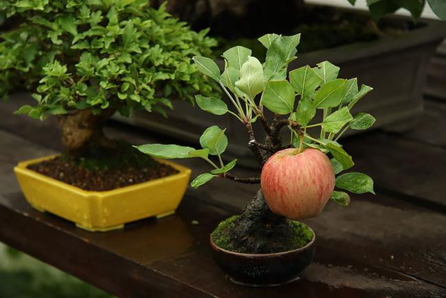Bộ sưu tập những kiệt tác bonsai đẹp nhất thế giới Amazin17