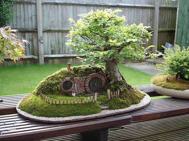 Bộ sưu tập những kiệt tác bonsai đẹp nhất thế giới Amazin20