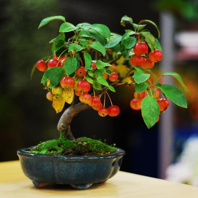 Bộ sưu tập những kiệt tác bonsai đẹp nhất thế giới Amazin22