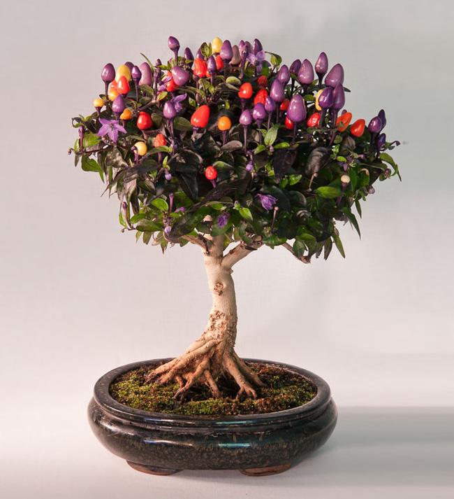 Bộ sưu tập những kiệt tác bonsai đẹp nhất thế giới Amazin23