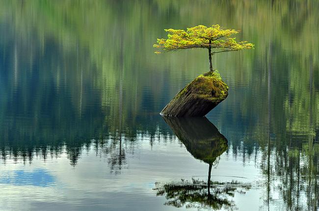 Bộ sưu tập những kiệt tác bonsai đẹp nhất thế giới Amazin24