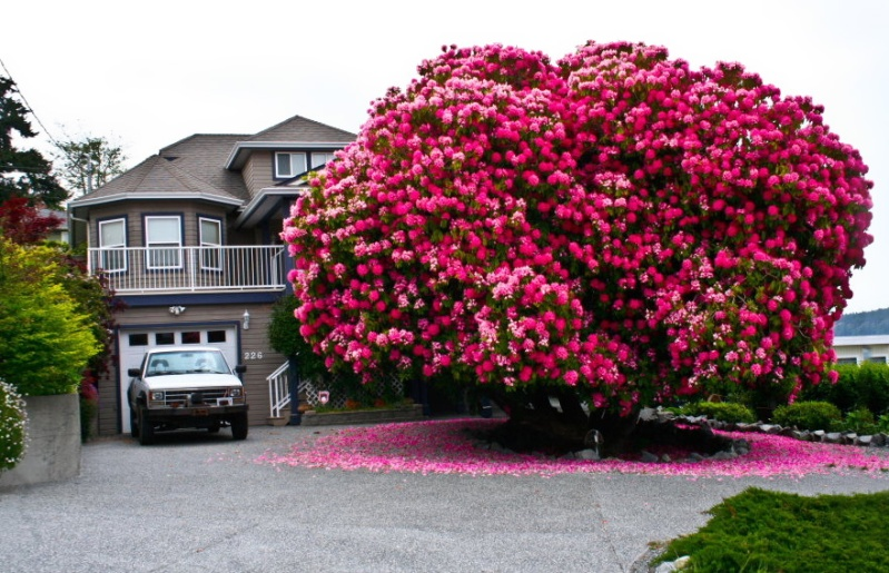 Ngắm 16 loài cây đẹp nhất thế giới Amazin25