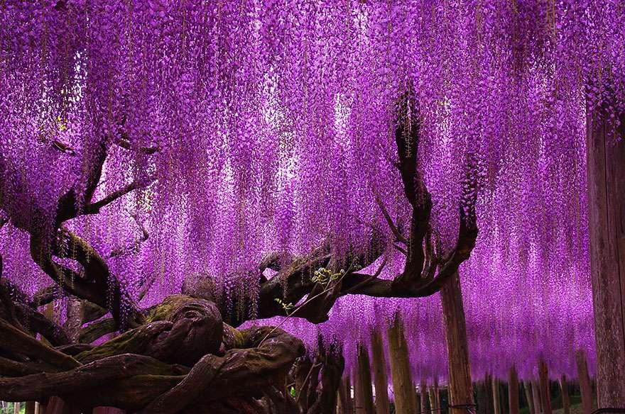 Ngắm 16 loài cây đẹp nhất thế giới Amazin26