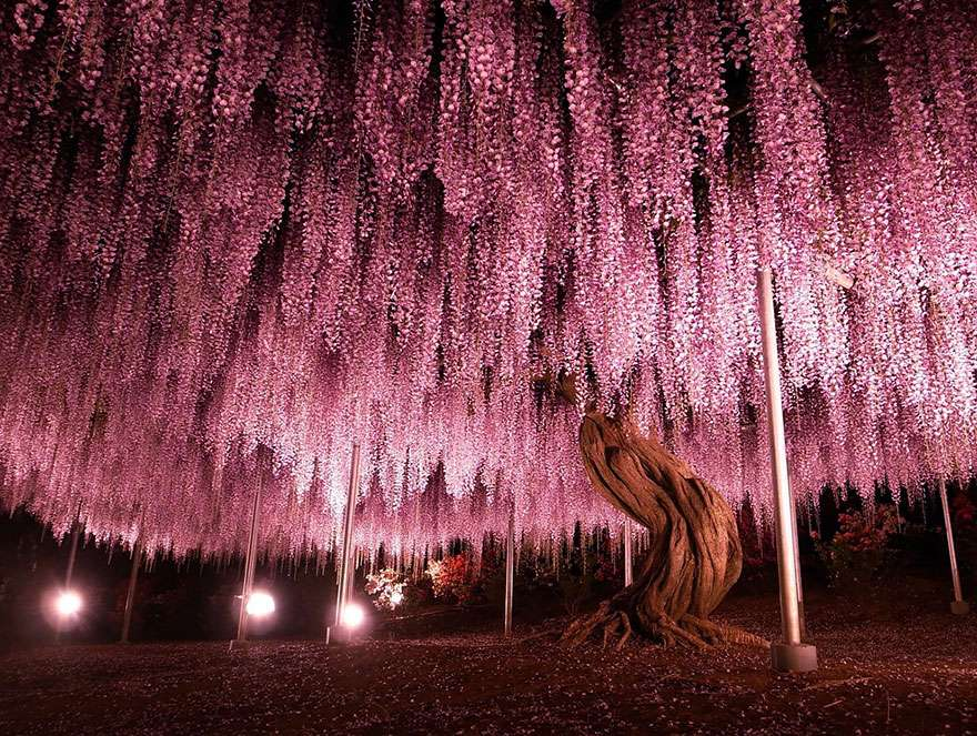Ngắm 16 loài cây đẹp nhất thế giới Amazin27