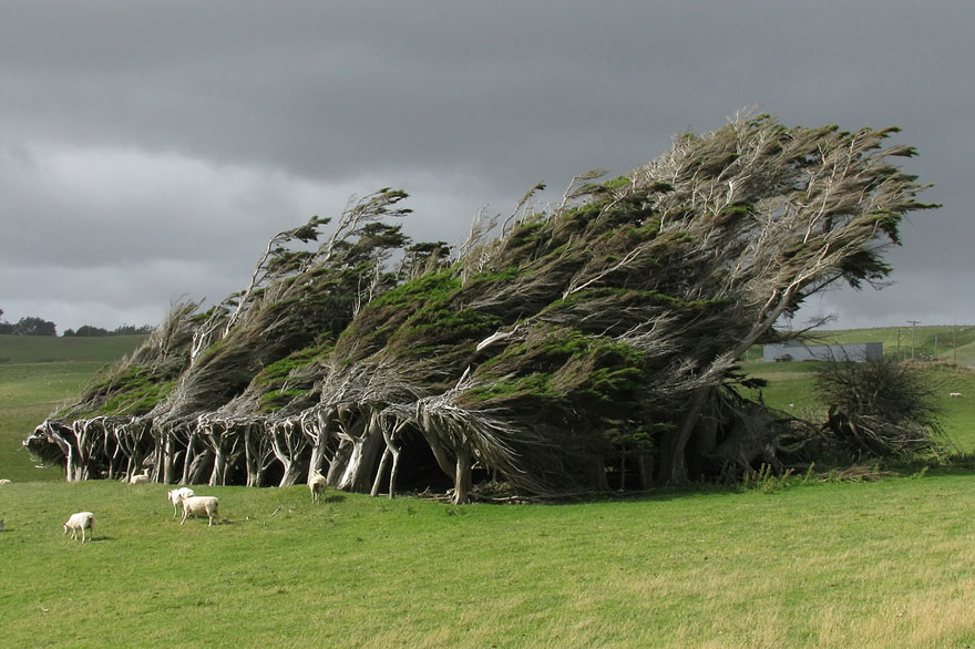 Ngắm 16 loài cây đẹp nhất thế giới Amazin28