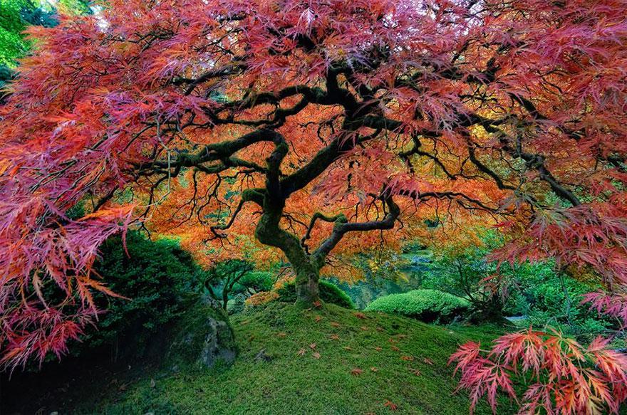 Ngắm 16 loài cây đẹp nhất thế giới Amazin29