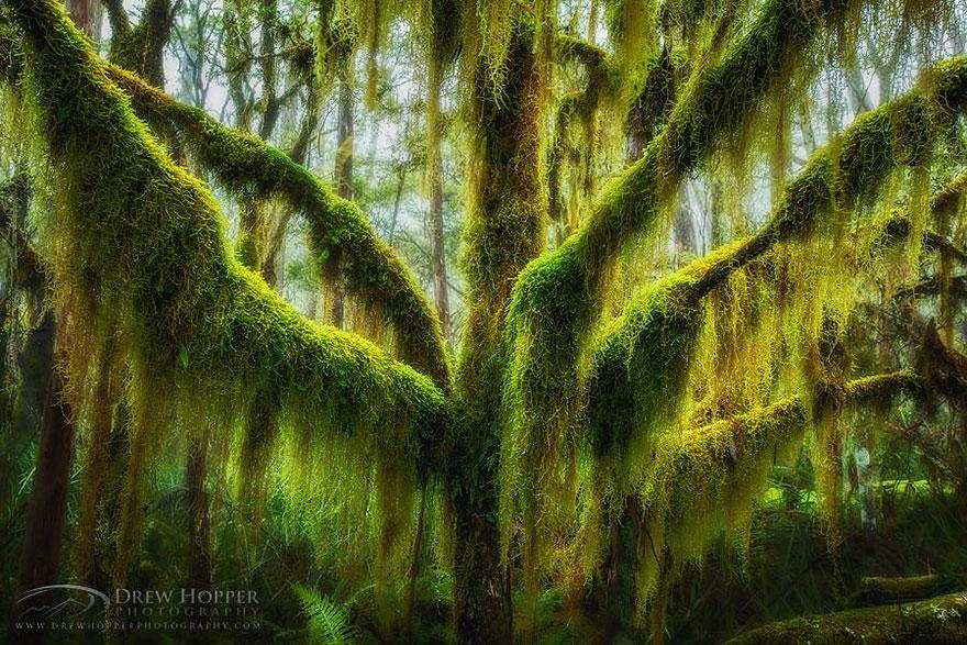 Ngắm 16 loài cây đẹp nhất thế giới Amazin30