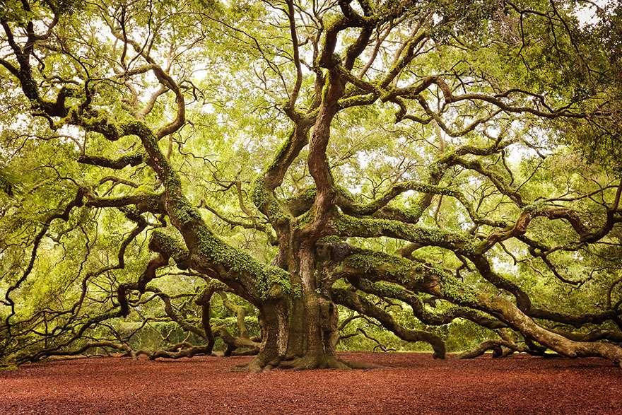 Ngắm 16 loài cây đẹp nhất thế giới Amazin33