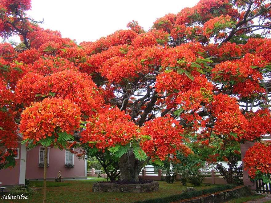 Ngắm 16 loài cây đẹp nhất thế giới Amazin34