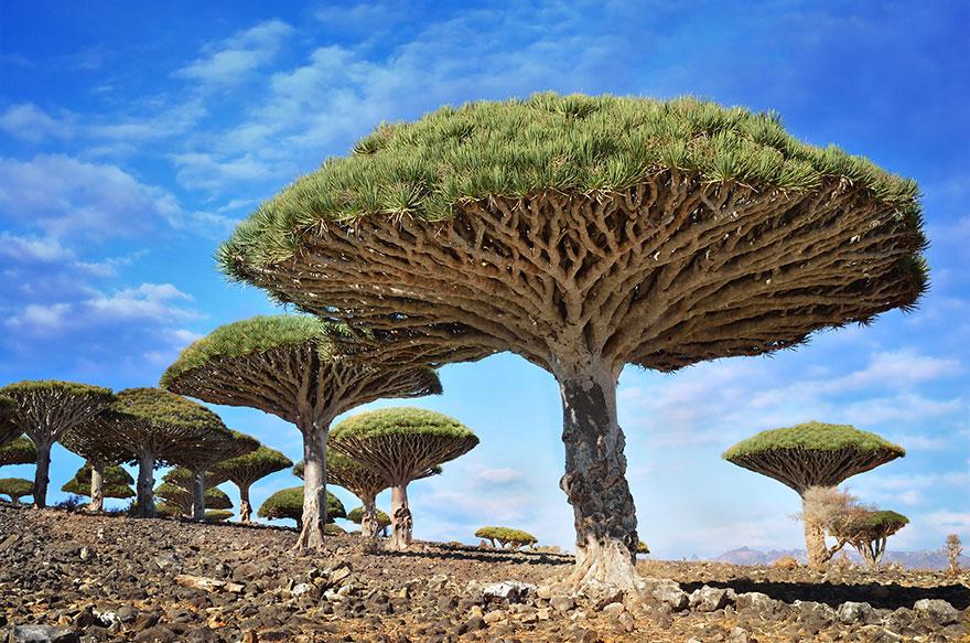 Ngắm 16 loài cây đẹp nhất thế giới Amazin35