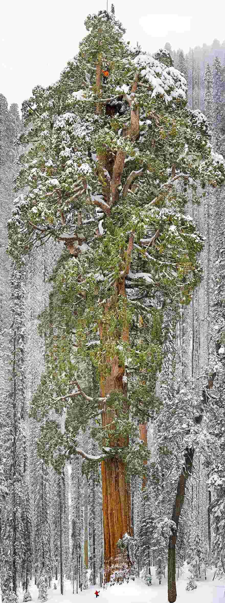 Ngắm 16 loài cây đẹp nhất thế giới Amazin36