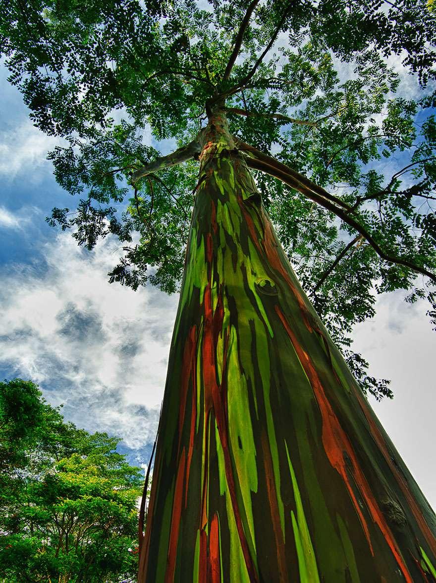 Ngắm 16 loài cây đẹp nhất thế giới Amazin38