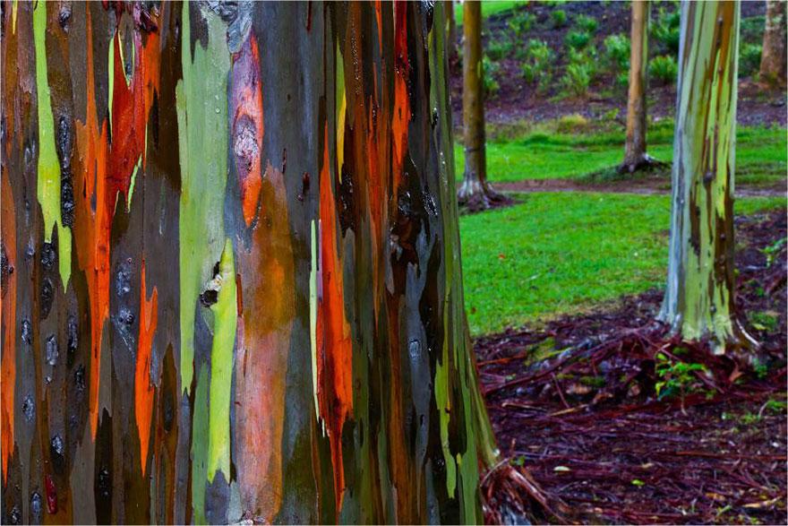 Ngắm 16 loài cây đẹp nhất thế giới Amazin39