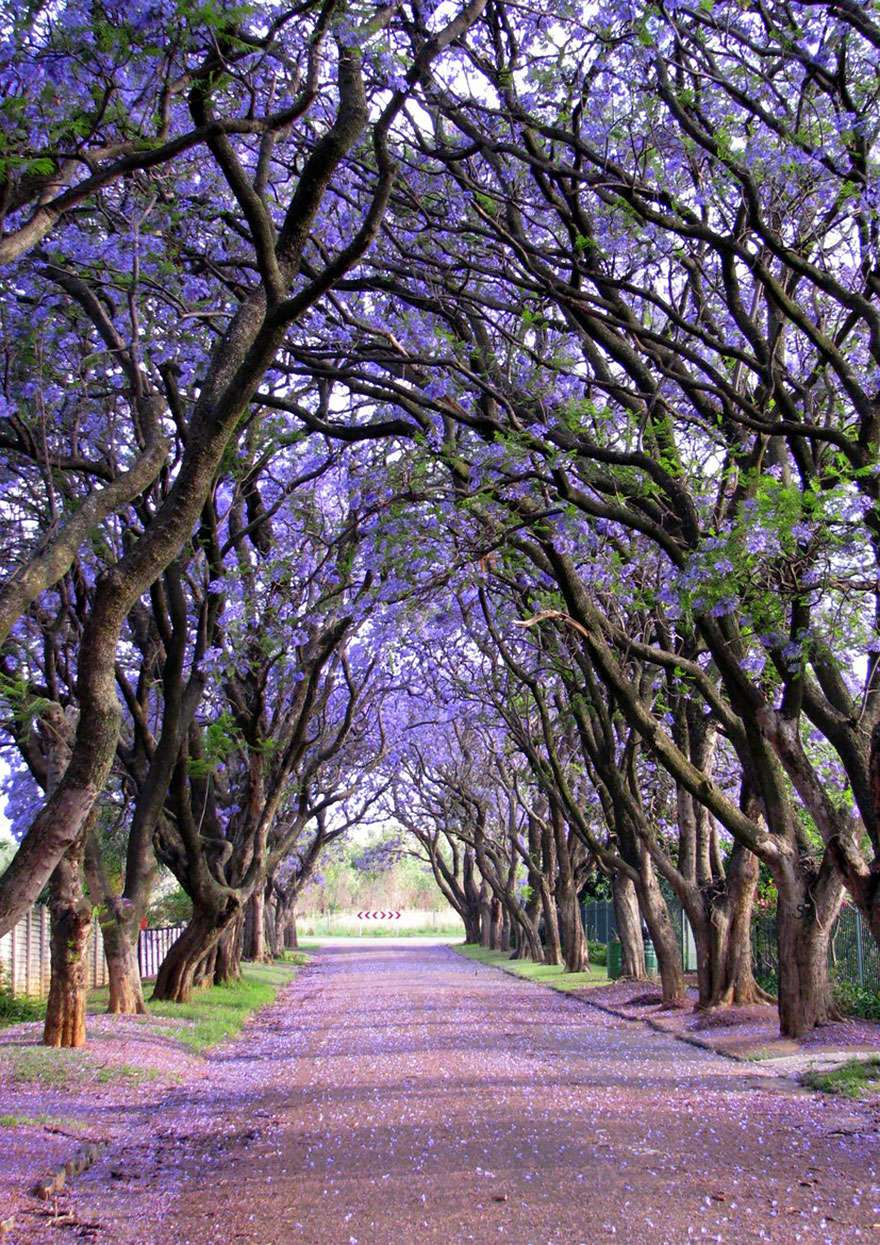 Ngắm 16 loài cây đẹp nhất thế giới Amazin40