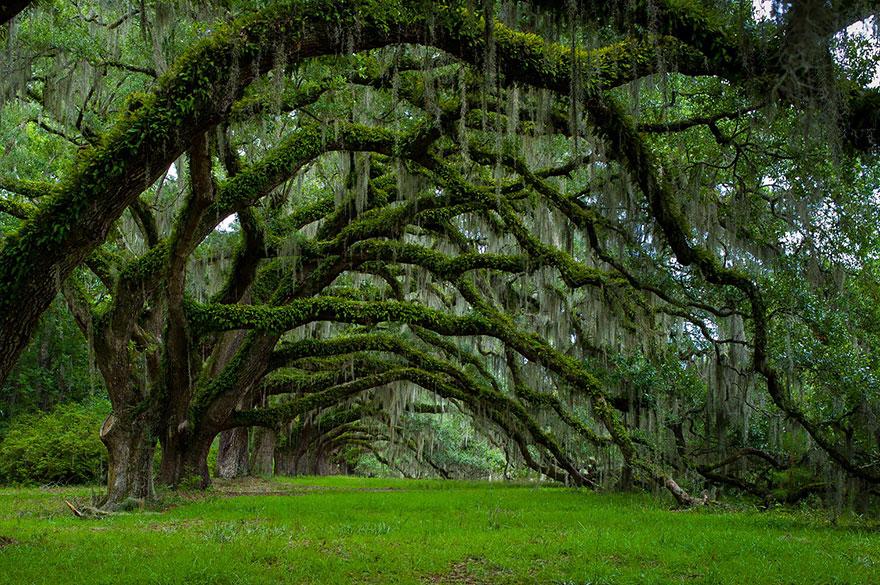 Ngắm 16 loài cây đẹp nhất thế giới Amazin41