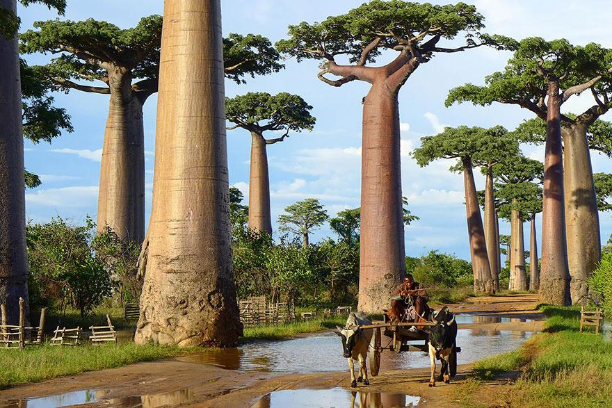 Ngắm 16 loài cây đẹp nhất thế giới Amazin42