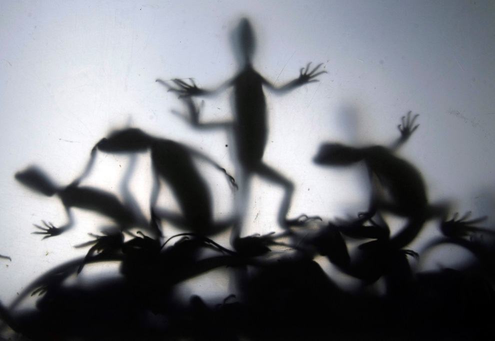 Vẻ kỳ ảo của thế giới qua ảnh chụp ngược sáng S13_2310