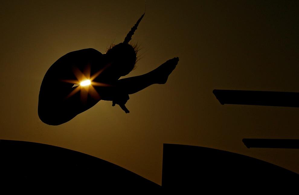 Vẻ kỳ ảo của thế giới qua ảnh chụp ngược sáng S20_0010