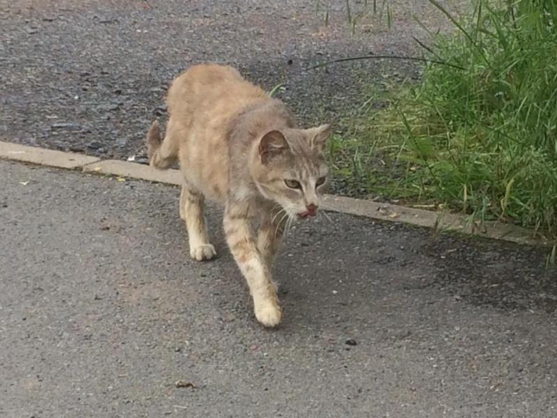 SOS pour une dizaine de chats dont siams (59) 13327410