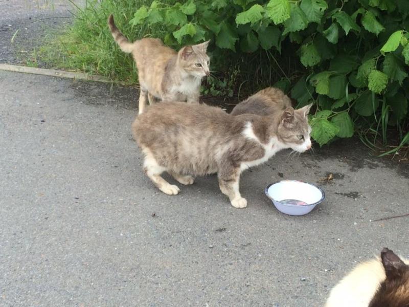 SOS pour une dizaine de chats dont siams (59) 13339610