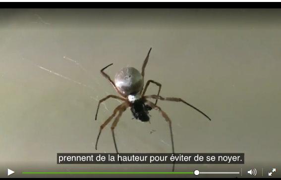 Une effrayante pluie d'araignées s'abat en Australie Araign13