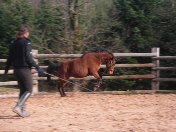 équitation éthologique avec nass Dscn2323