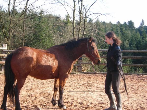 équitation éthologique avec nass Dscn2325