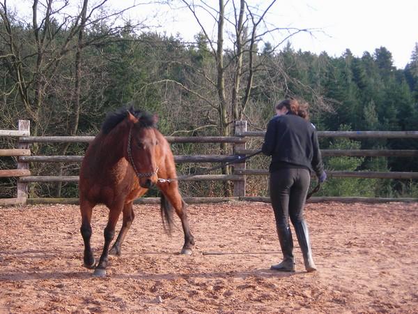 équitation éthologique avec nass Dscn2326