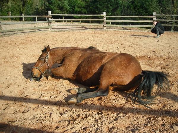 équitation éthologique avec nass Dscn2327