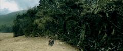 La Forêt de Fangorn
